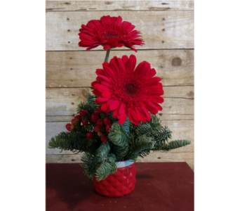 Merry & Bright in Sioux Falls SD, Cliff Avenue Florist