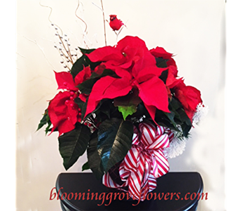 BGF4728 in Buffalo Grove IL, Blooming Grove Flowers & Gifts