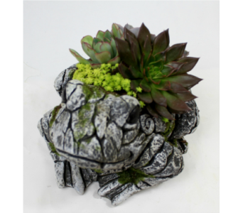 Large Frog Succulent Garden  in Ferndale MI, Blumz...by JRDesigns