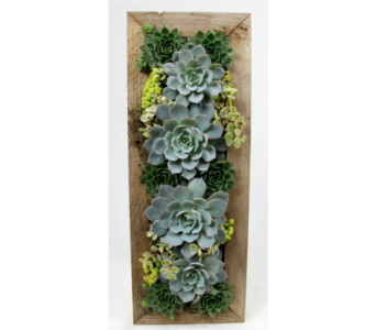 Succulent Wall hanging  in Ferndale MI, Blumz...by JRDesigns