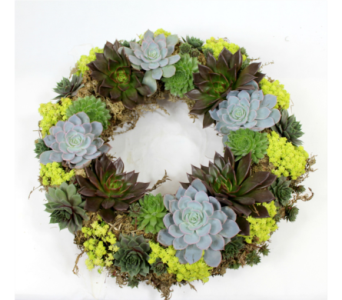 Succulent Wreath  in Ferndale MI, Blumz...by JRDesigns