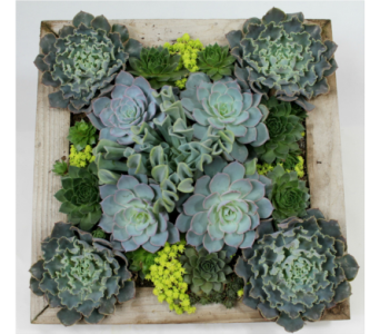 Square Succulent Garden  in Ferndale MI, Blumz...by JRDesigns