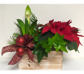 Amaryllis Christmas Planter with Poinsettia in Wyoming MI, Wyoming Stuyvesant Floral