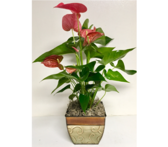 Antherium Plant in 6-1/2 inch square Metal Planter in Wyoming MI, Wyoming Stuyvesant Floral