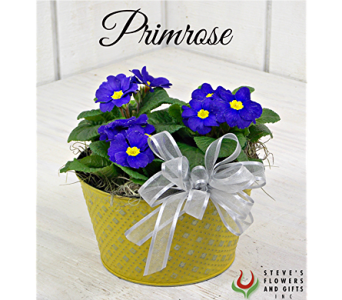 Primrose Path in Indianapolis IN, Steve's Flowers and Gifts