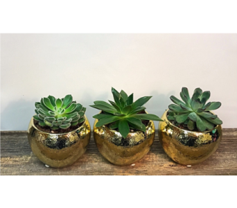 Golden Succulent Trio in Vermilion AB, Fantasy Flowers