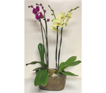 Orchid Plants in Metal in Wyoming MI, Wyoming Stuyvesant Floral