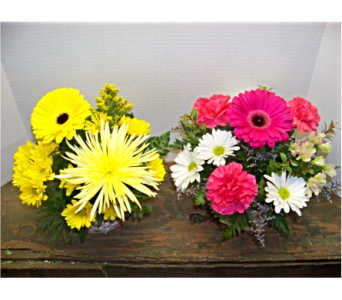 YELLOW OR PINK BURST in Claremont NH, Colonial Florist