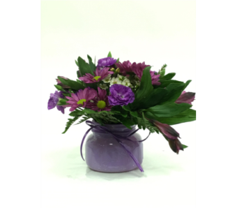 Passion in Purple in Greeley CO, Mariposa Plants & Flowers