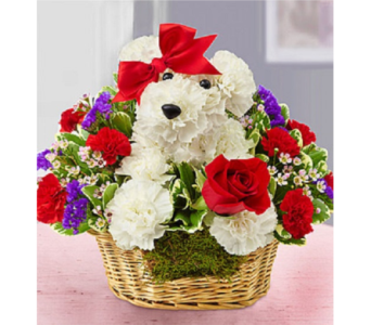 Love Pup in Allentown PA, Ashley's Florist
