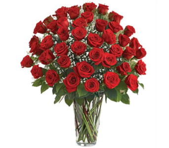 48 ROSES in Aston PA, Minutella's Florist