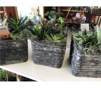 Medium Succulent Planter in Guelph ON, Patti's Flower Boutique