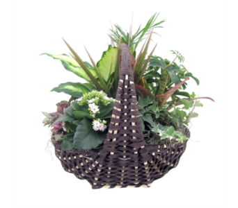 Medium Empire Planter in St Catharines ON, Vine Floral