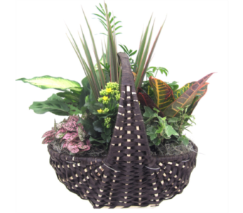Large Empire Planter in St Catharines ON, Vine Floral