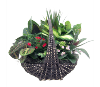 XL Empire Planter in St Catharines ON, Vine Floral