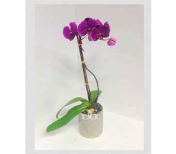 Brilliant Purple Orchid in Washington DC, Greenworks
