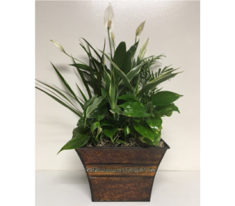 10 inch Square Metal Planter in Wyoming MI, Wyoming Stuyvesant Floral