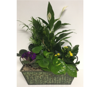 Cathedral Metal Planter - 12x8 inch  in Wyoming MI, Wyoming Stuyvesant Floral
