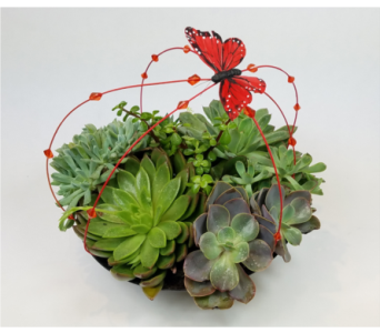 Succulent Love in Ferndale MI, Blumz...by JRDesigns