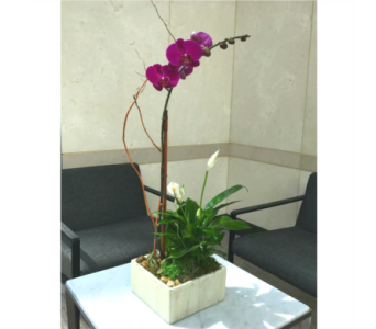 SERENITY GARDEN WITH PURPLE ORCHID in Arlington VA, Twin Towers Florist