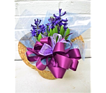 Spring Hyacinth Basket in Springfield MO, House of Flowers Inc.