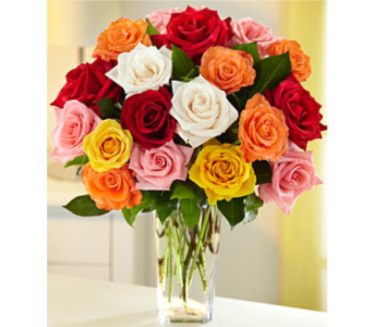 Dozen Assorted Roses in Sudbury ON, Xpressions Flowers & More