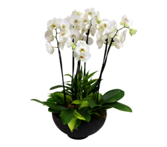 Grand Orchid Garden  in Detroit and St. Clair Shores MI, Conner Park Florist