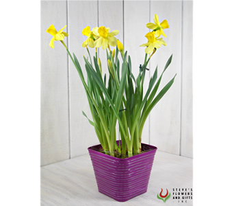 I Am Daffy-Dil For You in Indianapolis IN, Steve's Flowers and Gifts