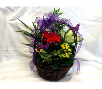 Butterfly Garden Basket in Hollidaysburg PA, Warner's Florist Gifts & Greenhouse