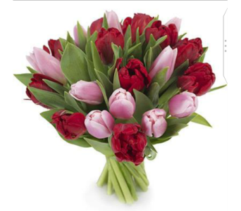 Mix Tulips in Etobicoke ON, Alana's Flowers & Gifts