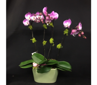 Lavender Phaleonopsis in Oakland CA, J. Miller Flowers and Gifts