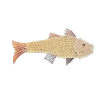 Specialty Spray - Fish in Monroe CT, Irene's Flower Shop