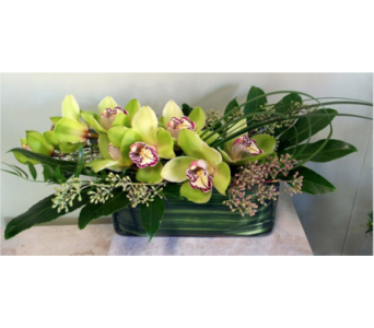 Cymbidium Sail Away in Washington DC, Greenworks By Shane