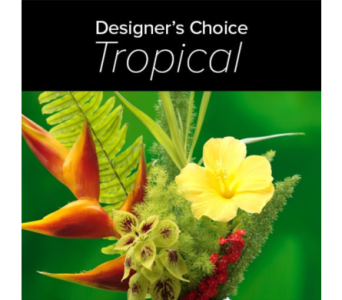 Designer Choice Tropicals in Bradenton FL, Ms. Scarlett's Flowers & Gifts