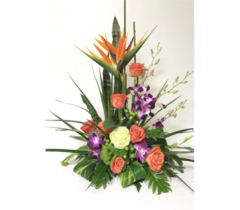 Tropical Delight in Clearwater FL, Hassell Florist