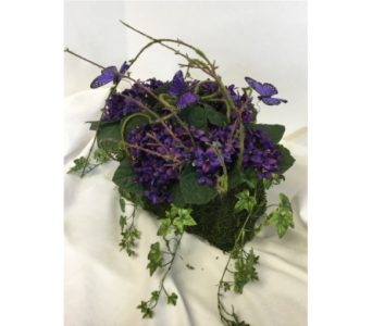 African Violet and Butterflies in Crafton PA, Sisters Floral Designs