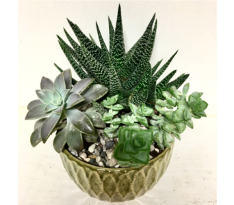 Succulent Garden in 8 inch Green Ceremic in Wyoming MI, Wyoming Stuyvesant Floral