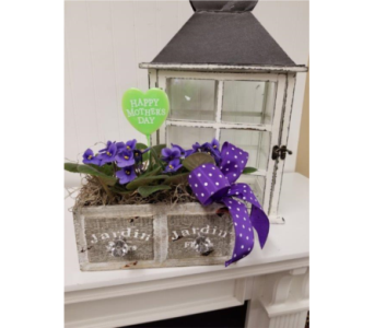 Mother's Day Violet x Two  in Alexandria MN, Anderson Florist & Greenhouse