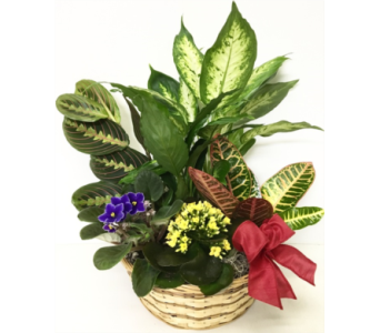 Bright Living Planter Basket in Wyoming MI, Wyoming Stuyvesant Floral