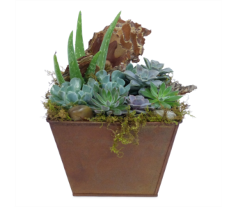Square Copper Succulents in Silver Spring MD, Bell Flowers, Inc