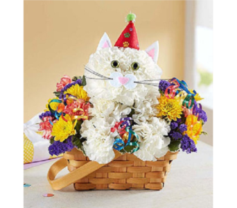 Purr-fect Party Cat in Allentown PA, Ashley's Florist