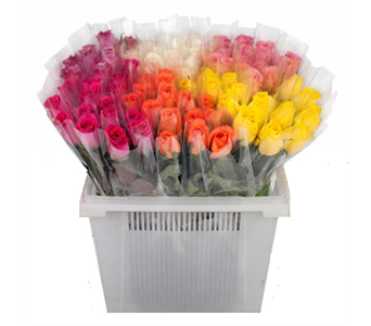 Individually Wrapped Roses in Columbus OH, OSUFLOWERS .COM