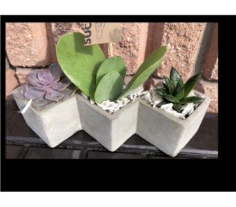 Three Cube Succulent Planter in Guelph ON, Patti's Flower Boutique