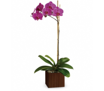 Single Stem Purple Orchid in Winston Salem NC, Sherwood Flower Shop, Inc.