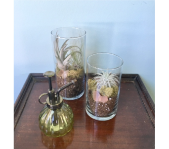 GeNell's Original Air Plant Gift Set in Piqua OH, Genell's Flowers