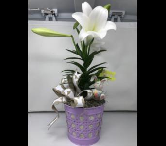 Single Easter Lily In Naples FL, Driftwood Garden Center U0026 Florist