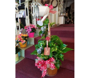 Green Plant with Windchime in Nashville TN, Emma's Flowers & Gifts, Inc.
