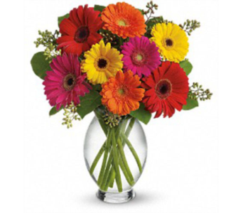 Teleflora''s Gerbera Brights in London ON, Lovebird Flowers Inc