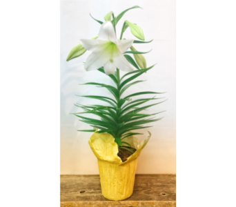 Easter Lily in Vermilion AB, Fantasy Flowers