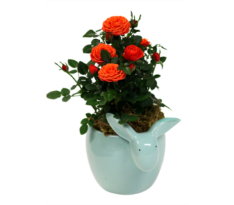 Bunny Rose Planter  in Detroit and St. Clair Shores MI, Conner Park Florist